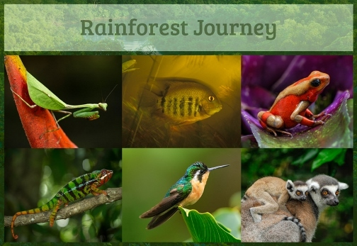 Rainforest Journey {TOS Crew Review}